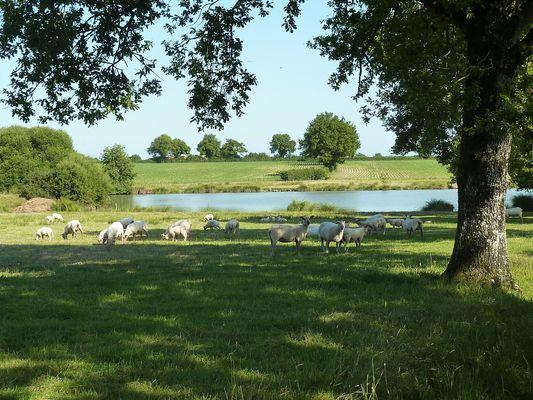 rorthais-gite-charmille-moutons1©BenedicteBesnard.jpg_13