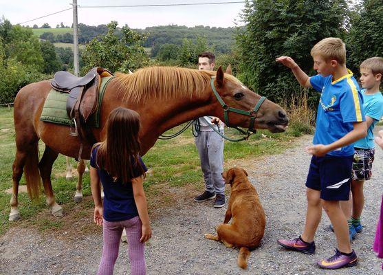 saint-paul-en-gatine-gites-au-cocorico-au-marcassin-equitation.jpg_13