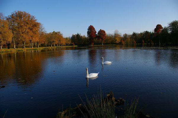 Parc de la Ferté-Vidame (automne 2007).