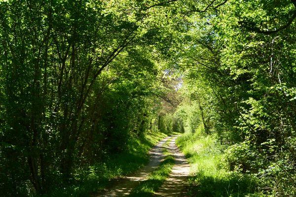 Sortie nature MémoTopic Balade cycliste à la découverte de la nature et des paysages - St-Prest 13-06-20