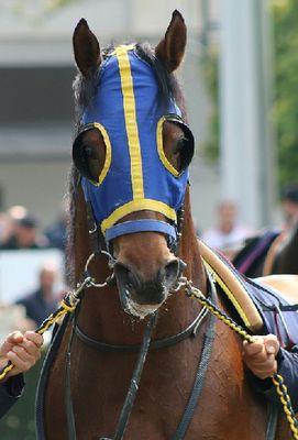 horse-2305258_960_720
