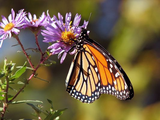 papillons-et-linelulles-la-borde