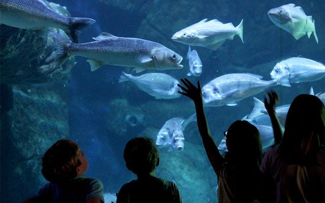 Aquashow