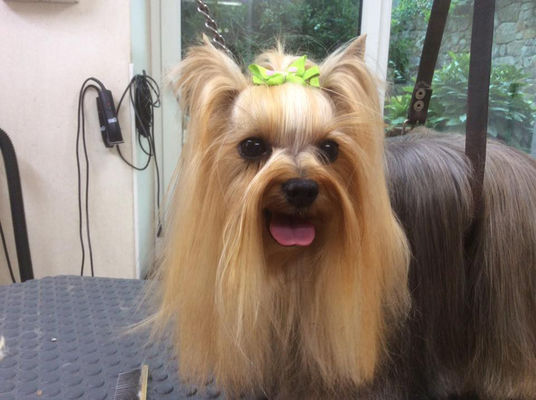 Elegance-Canine---Pont-l-Abbe---Pays-Bigouden---5