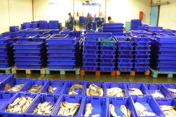 Les bacs à poissons de la criée d'Erquy
