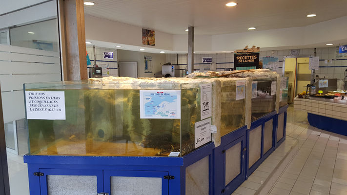 Poissonnerie La Marée du Jour - Guilvinec - Pays Bigouden (4)
