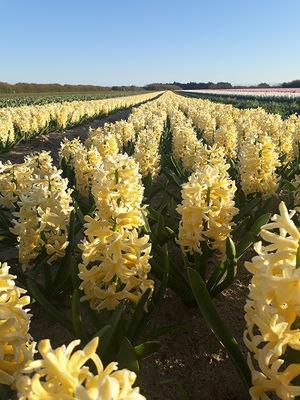 Fête des fleurs  - Plomeur - Pays bigouden sud