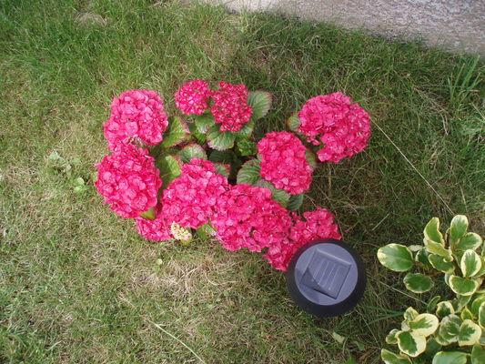 a2_Fleurs_1-Cayla