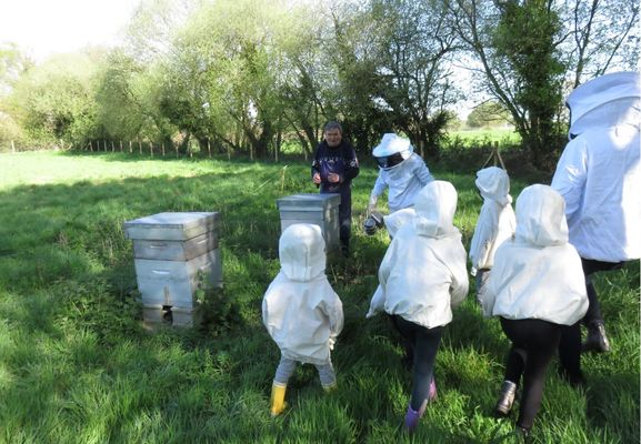 activite-ruche