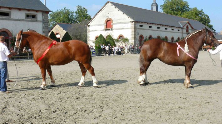 cheval-breton-6