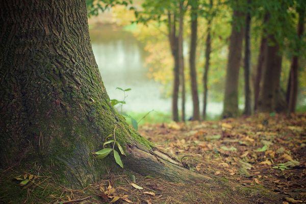 tree-trunk-569275-960-720-2