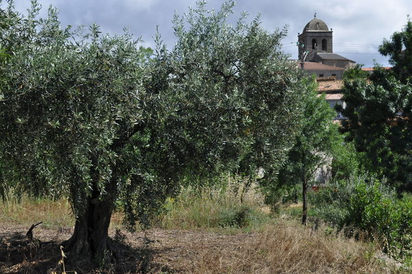 La Livinière - Mas des Meules
