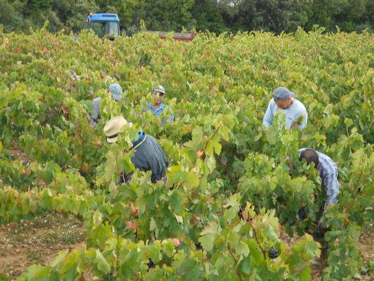 Domaine Cavailles - Minerve - vigneron Minervois