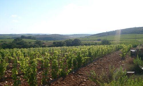 Domaine Galtier - vignes