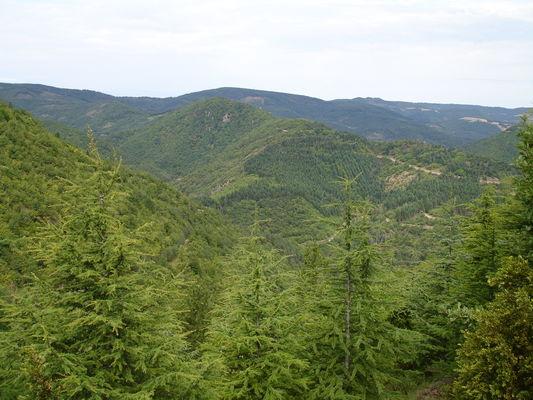 Forêt aux environs d'Avène_Sylvie HERPSON