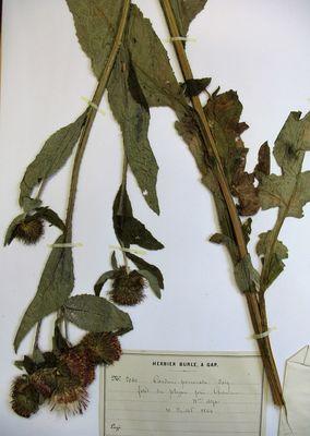 P9-Conf-23-janvier-les-herbiers-et-leur-restauration