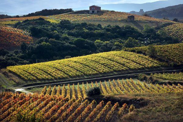 Vignoble de Faugères©G.Souche PHLV