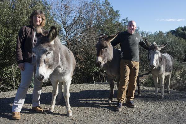 Sur le domaine, les ânes.