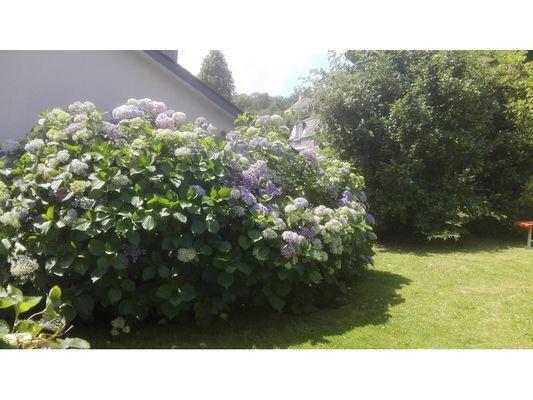 Mon-jardin2