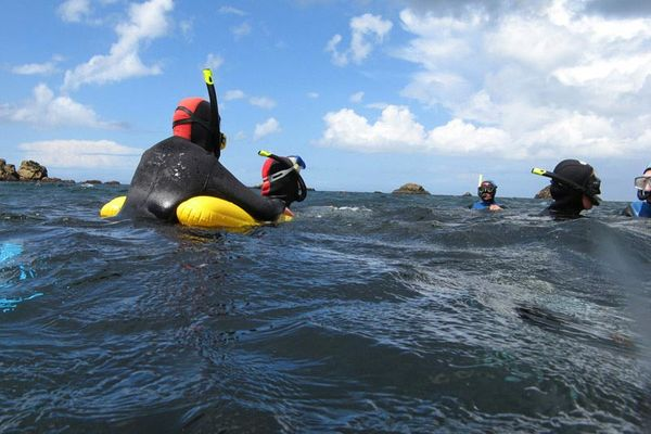 A la rencontre des phoques gris
