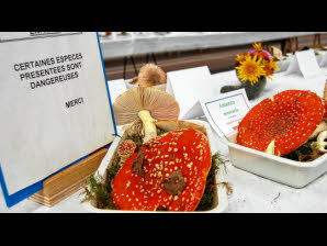 Expo champignons passions