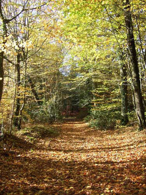 Forêt Domaniale du Mesnil
