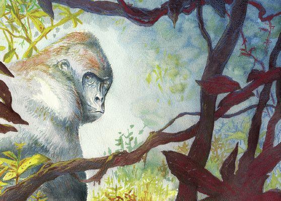 Gorille---PAZAPA-BD