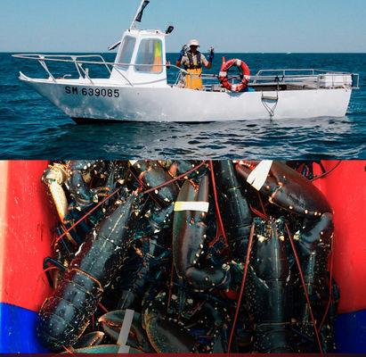 Homard & Co - pêche - Saint-Malo
