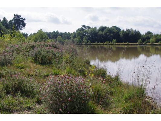 Sortie-nature-Monteneuf-Broceliande