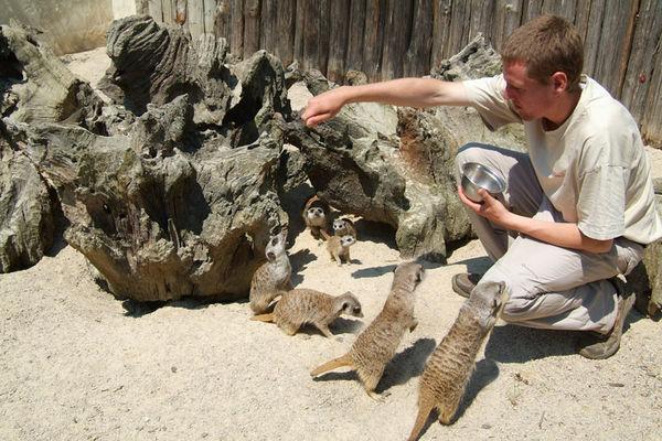 Suricates Zoo de la Bourbansais à Pleugeneuc