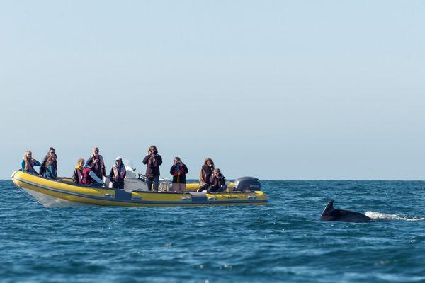 Association Al lark - bateaux promenade