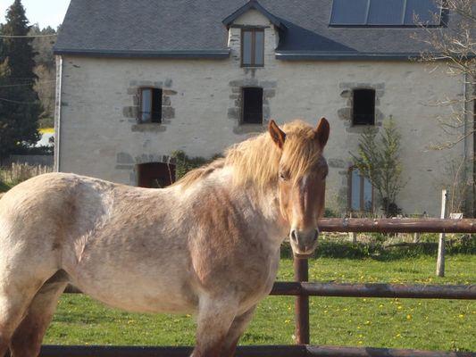 La claie des landes cheval - Sérent - Morbihan - Bretagne