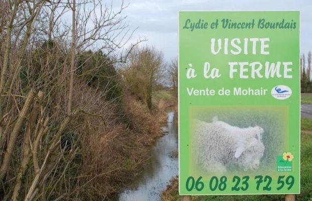 Le Mohair de la Côte d'Emeraude