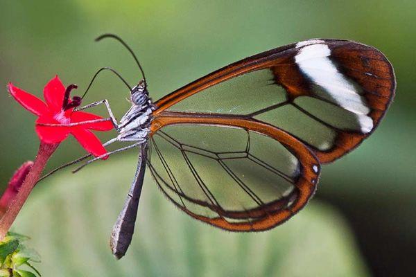 Le Jardin aux Papillons