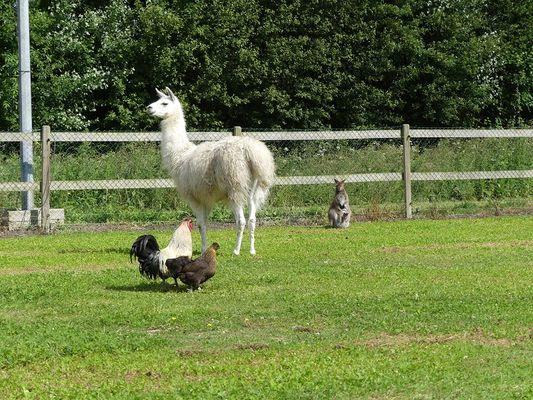 Parc animalier la ferme du point du jour pour site