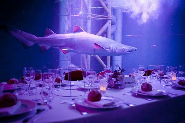 Réception - Location Salle - Grand Aquarium - Saint-Malo