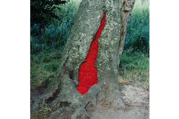 Nils-Udo, Hêtre, baies de Sorbier (Langeland, Danemark, 1993).