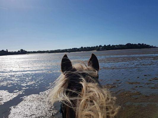 Ty-Haras-Lancieux-cheval-sur-la-plage