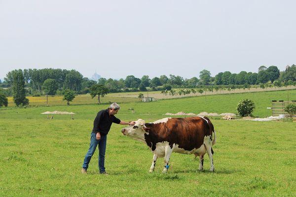 Vache - Ferme des Cara-Meuh - Vains -