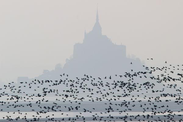 ©Birding Mont Saint-Michel  (1)