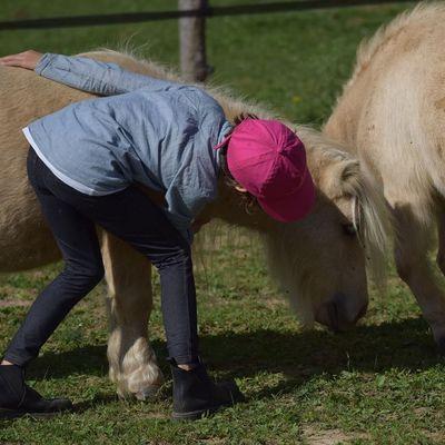 Poneys adaptés aux plus jeunes