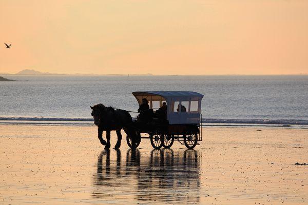 -chevaux-de-la-mer---3-