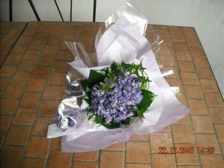Bouquet de violettes Viola 2000 RENNEVILLE