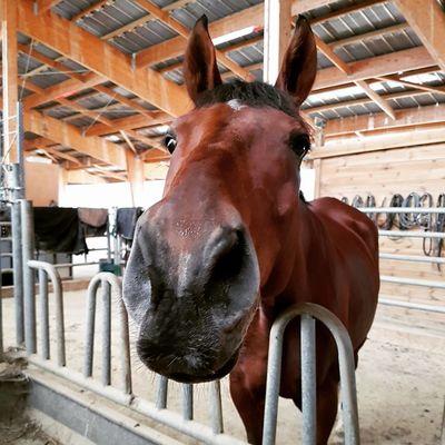 ecurie-de-ban--sarecave--equitation--haute-garonne--comminges--pyrenees