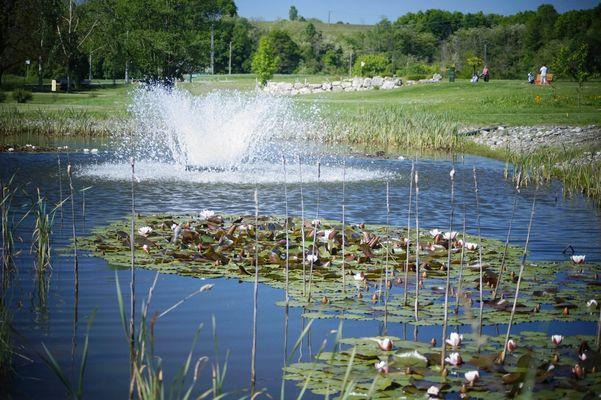 golf 1 SALIES
