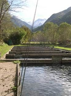 pisciculture-neste-oo