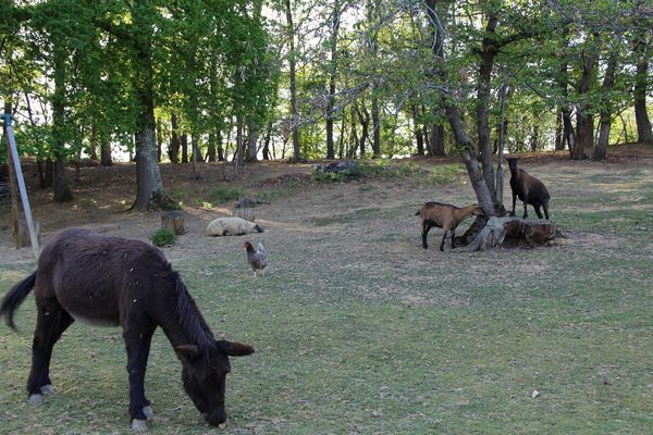 Yourtes Au Bois d'Escoumos - Gensac de Boulogne