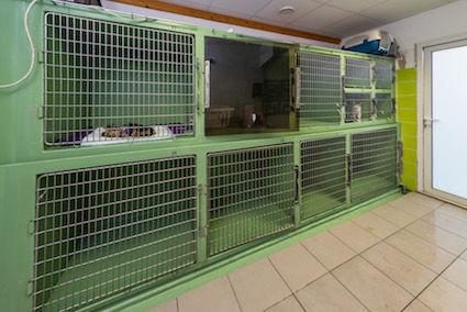 Clinique Vétérinaire8