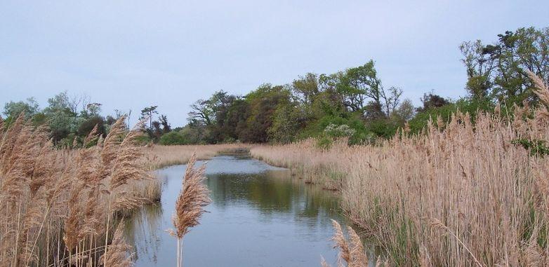 Le Verdon - Marais du Logit