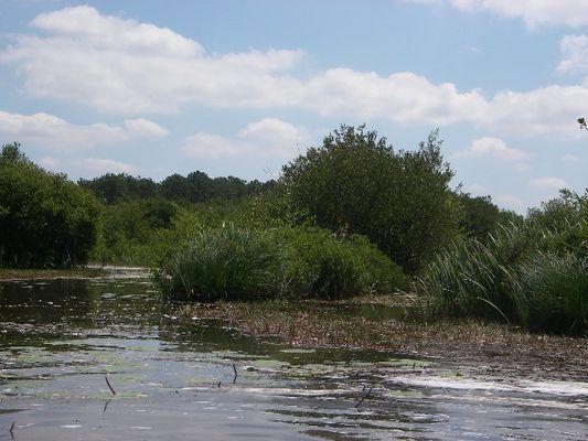 Rives Est du lac d'Hourtin